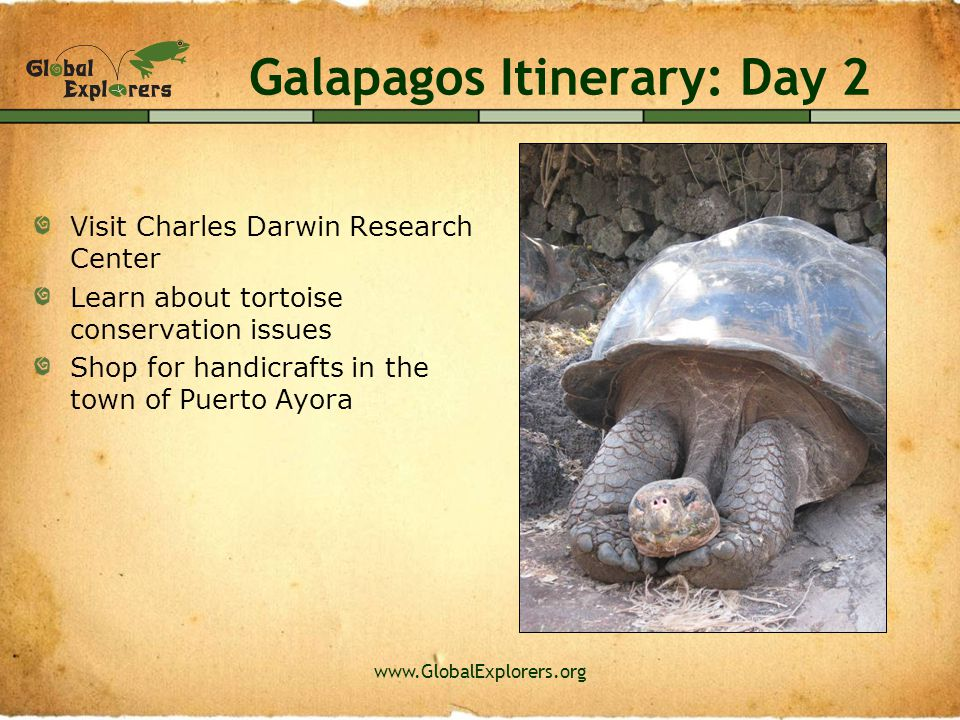 www.GlobalExplorers.org Galapagos Itinerary: Day 3 Boat to Seymour Island and Bachas Beach Possible Wildlife: magnificent frigate birds, blue footed boobies, land iguanas, sea turtles… Snorkeling pending conditions Optional Group Evening Activity
