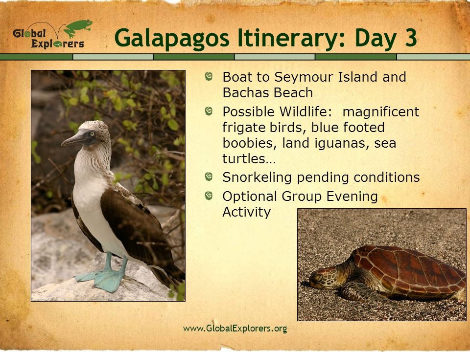 www.GlobalExplorers.org Galapagos Itinerary: Day 4 Boat to South Plaza Island and Punta Carrion Possible Wildlife: Sally lightfoot crabs, land iguanas, red-billed tropic birds, boobies, sea lions, cactus finches, Audubon's shearwater bird, common noddies, white tip reef sharks, rays… Snorkeling pending conditions Overnight stay in highlands with chance to see wild tortoises