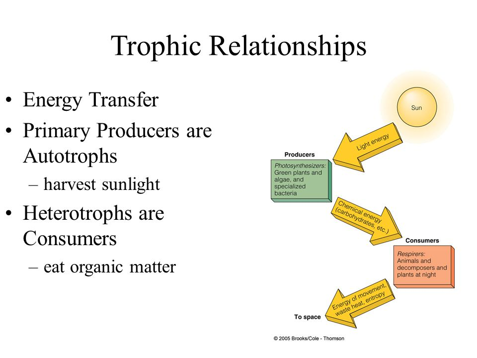 The Trophic Pyramid: A Model of Consumption