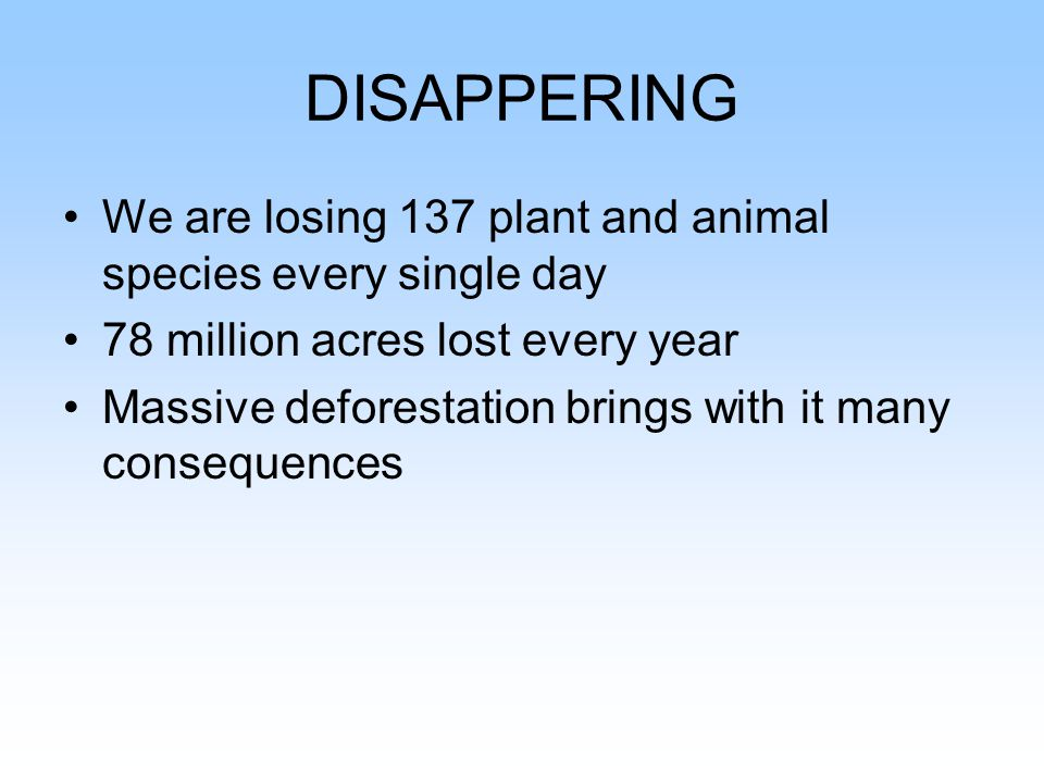 People living in the Rain Forests What Is Happening To The Forest People?
