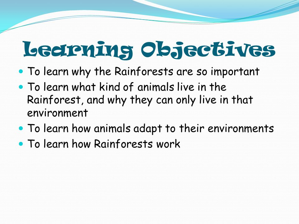 Questions What types of animals live in the Rainforest.