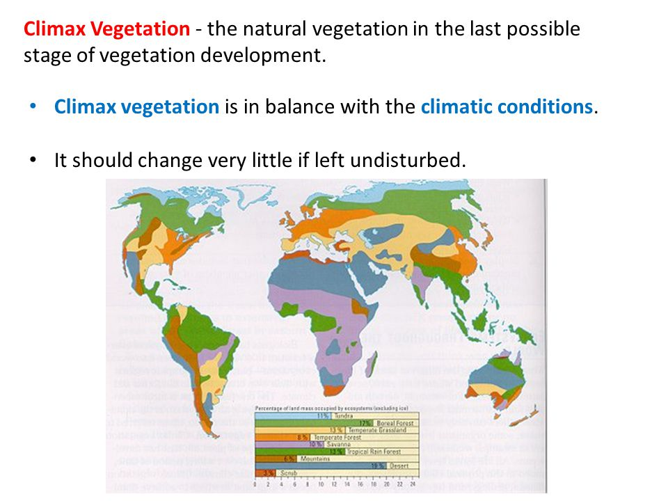 Climax vegetation in boreal (coniferous) forest: * Evergreen trees * Needle like leaves * Thick bark * Conical shape * Drooping branches * needle leaves reduce surface area meaning less water loss.