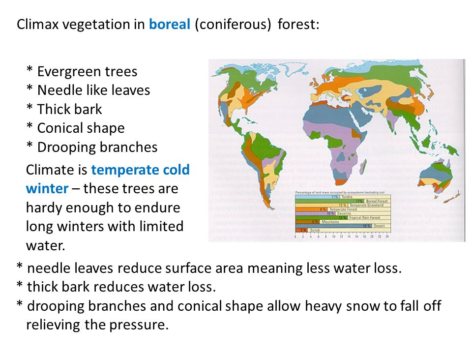 Complete # 19 on pages 102 – 103.a.Boreal Forest & Tundra are wide spread in high latitudes.