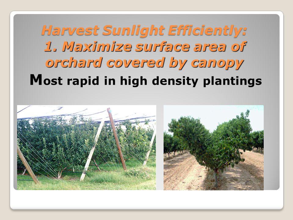 Harvest Sunlight Efficiently: 2.