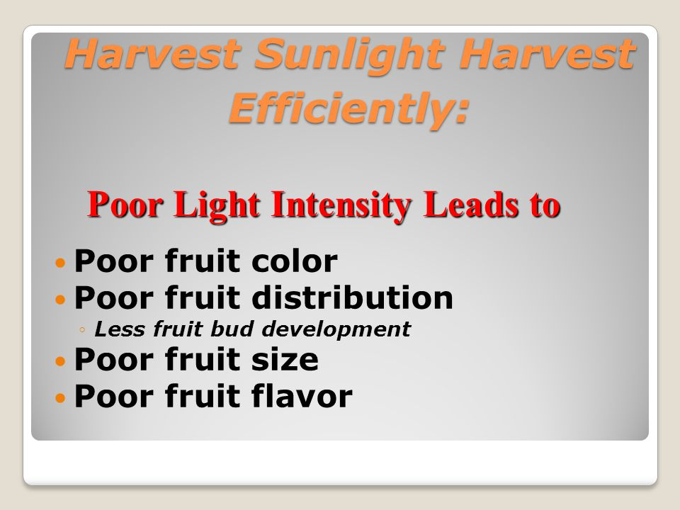 Harvest Sunlight Efficiently: Poor Light Intensity Leads to poor Color Harvest Sunlight Efficiently: Poor Light Intensity Leads to poor Color