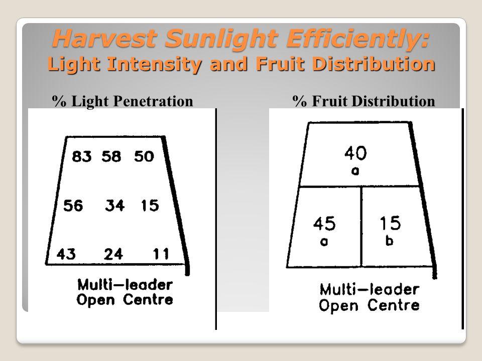 Harvest Sunlight Efficiently: Light Intensity and Fruit Flavor % Light Penetration % Soluble Solids