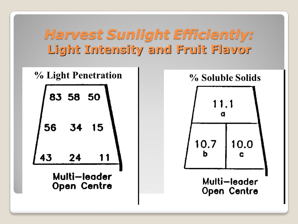 Harvest Sunlight Efficiently Maximize Orchard Floor Covered with Canopy Limit canopy depth to 1.0 m.