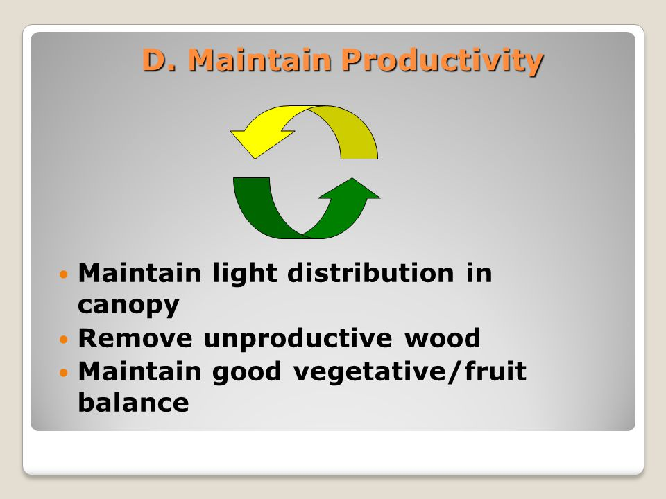 Maintain Productivity: Maintain light distribution in canopy Only sun-exposed areas produce quality fruit Limit canopy depth to 1.0 m.