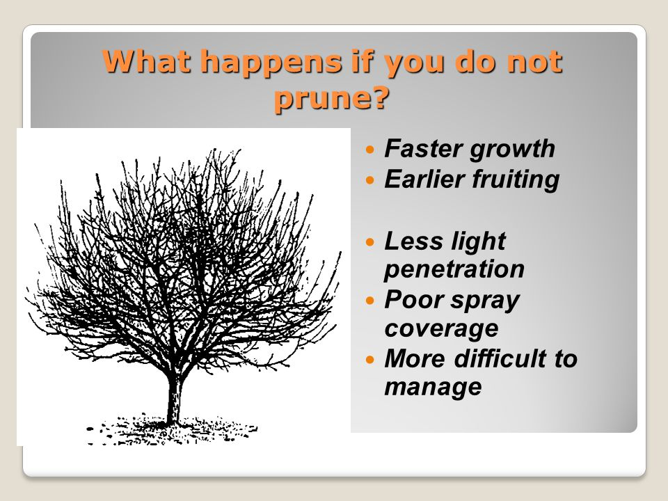 Objectives of training A.Establish a strong tree framework B.