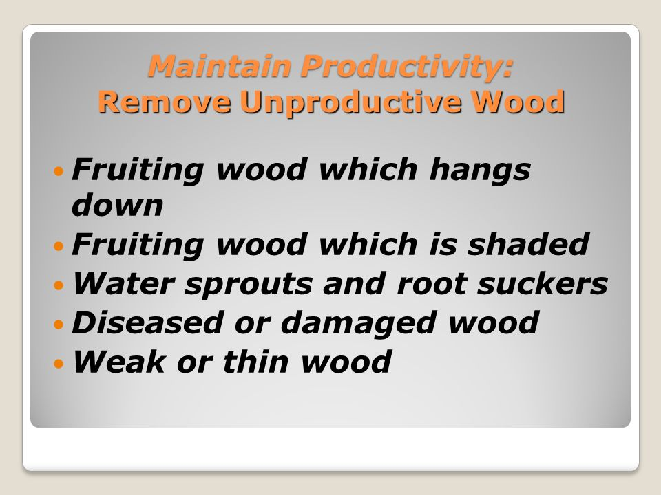 Maintain Productivity: Remove Unproductive Wood ◦Remove weak or thin wood