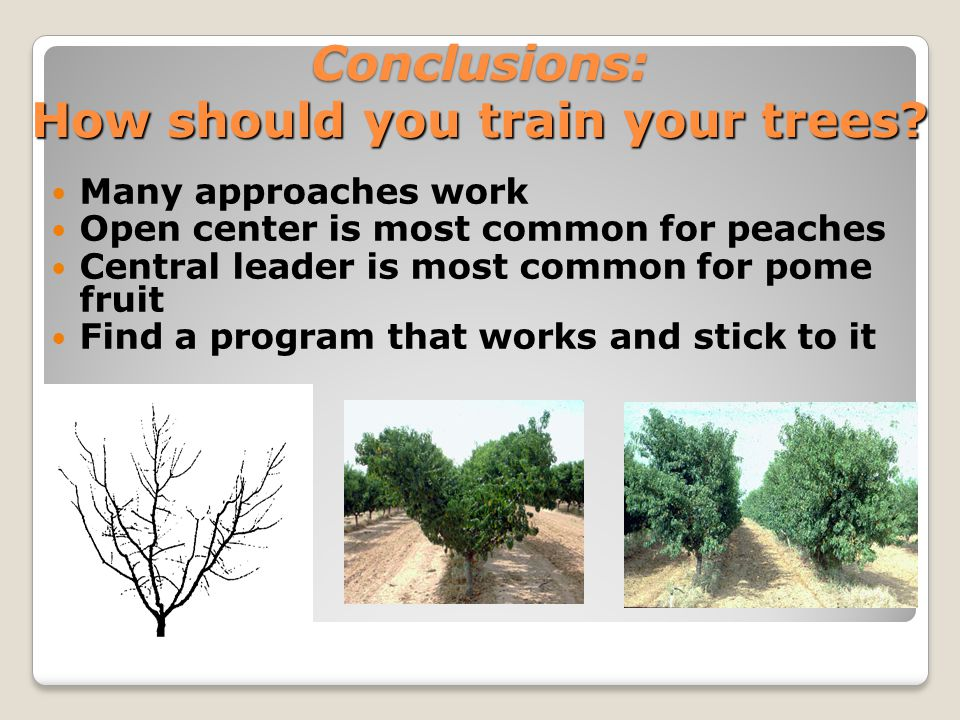 Conclusions: How should you train your trees.