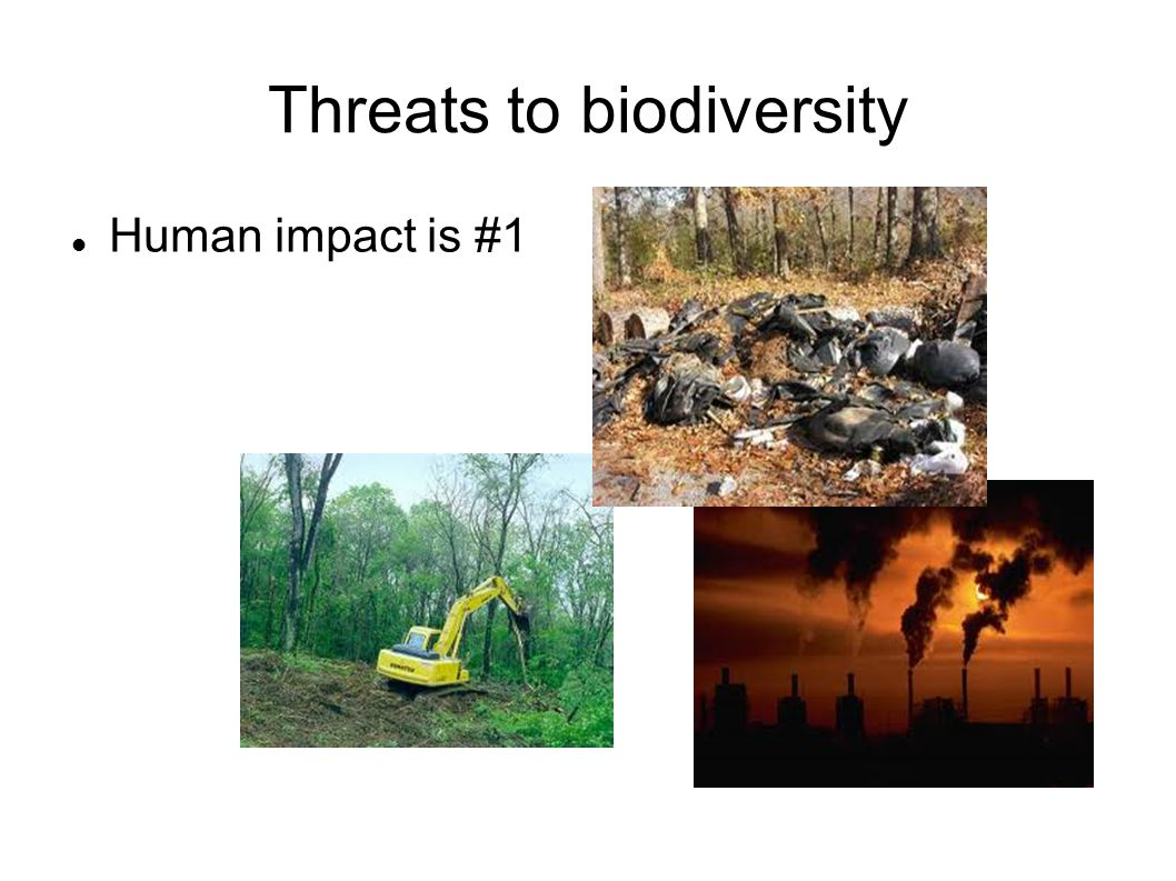 Threats to biodiversity 1.) Habitat alteration * land development splits habitats and destroys others *this makes the species that live there more fragile and open to harm from further change