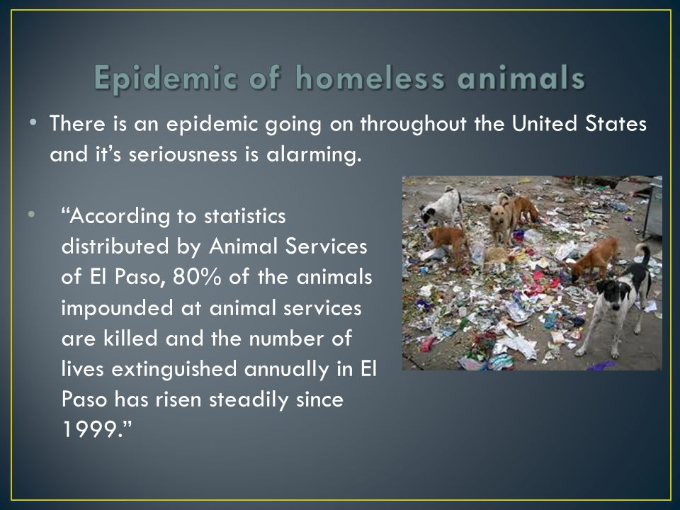 Sheltered animals are given a time limit of 3-7 days, before they are put to sleep or euthanized Animal Services is funded by the government.