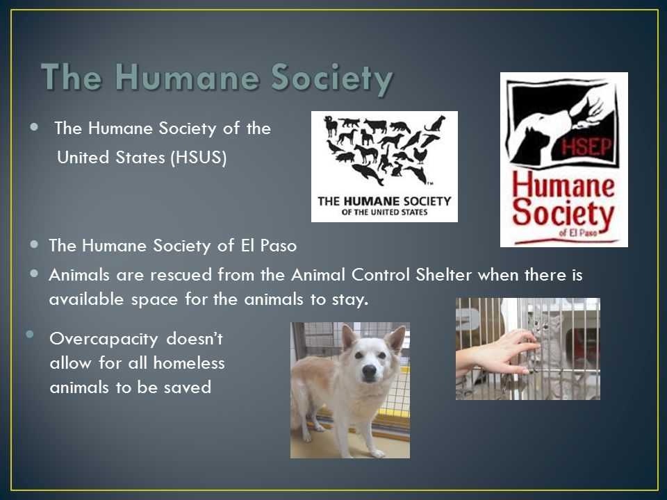 Prevention Spay/Neuter Education Alternatives Animal Therapy International Soldiers Best Friend Prison Pets Adoption