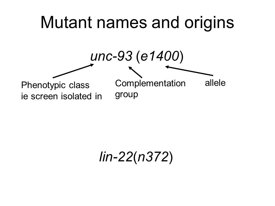 Cell lineage mutants Canonical cell lineage Stem cell like mutant lineages Homeotic mutant lineages Heterochronic mutant lineages