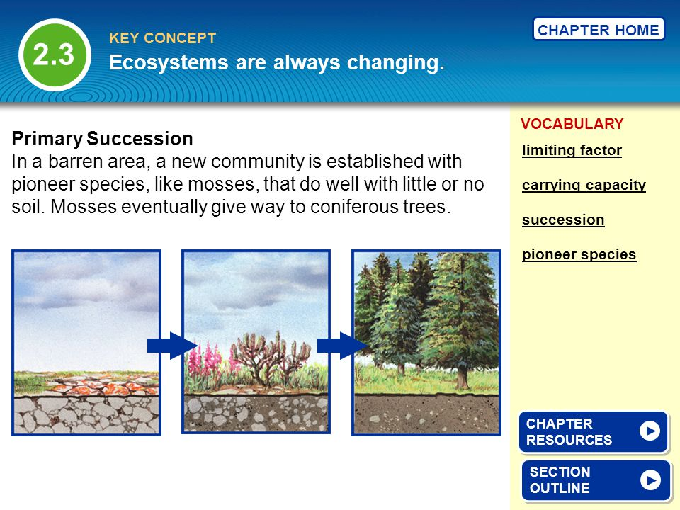 VOCABULARY KEY CONCEPT CHAPTER HOME Ecosystems are always changing.