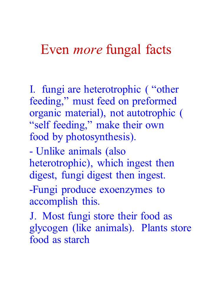 Final Fun Facts on Fungi K.