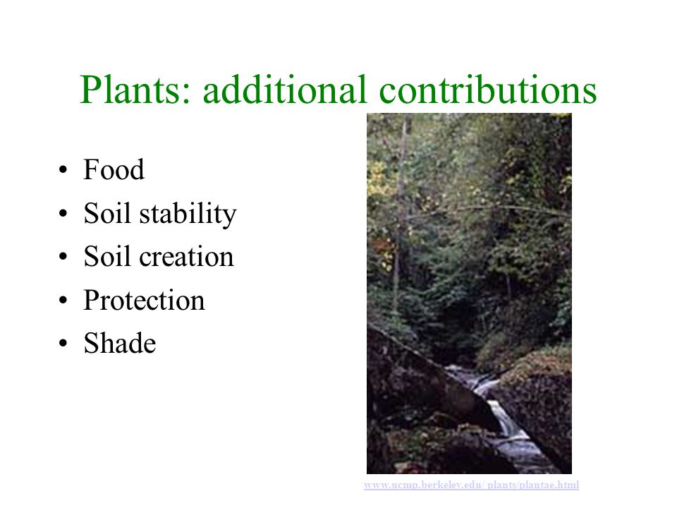 Plant Diversity Green algae Mosses Liverworts Ferns Gymnosperms Flowering plants