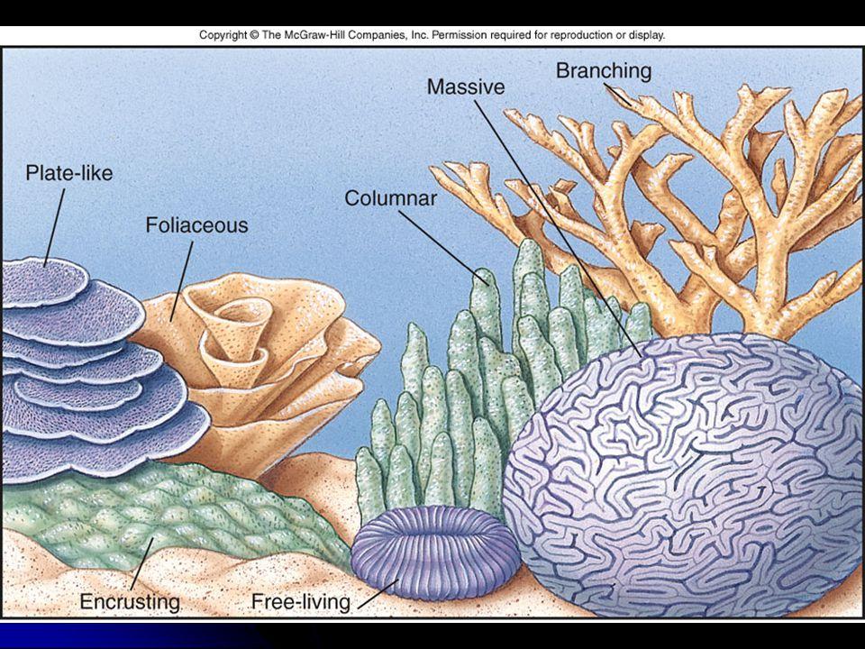 IV.IV.Corals A.