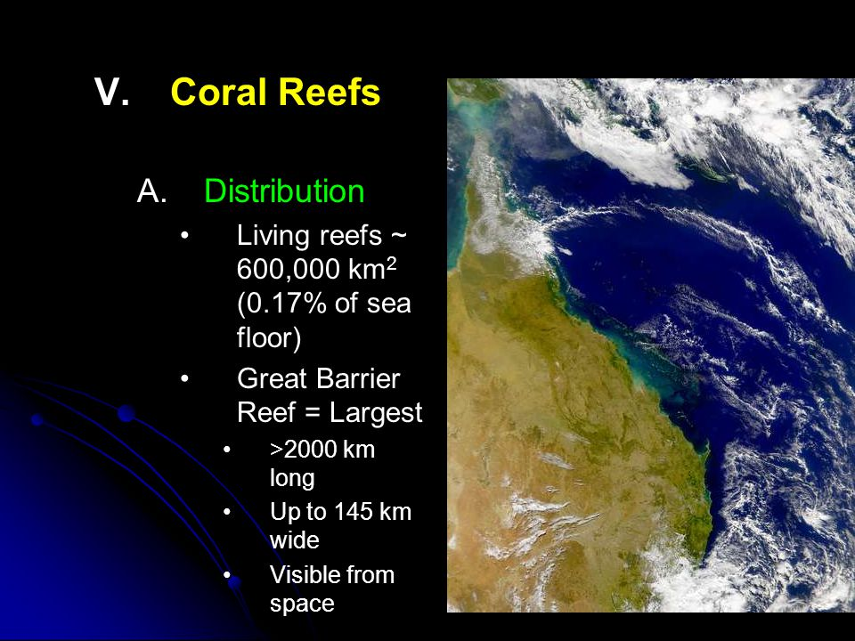 V.V.Coral Reefs B. B.Conditions 1. 1.Substrate Primarily in areas with hard substrate 2.