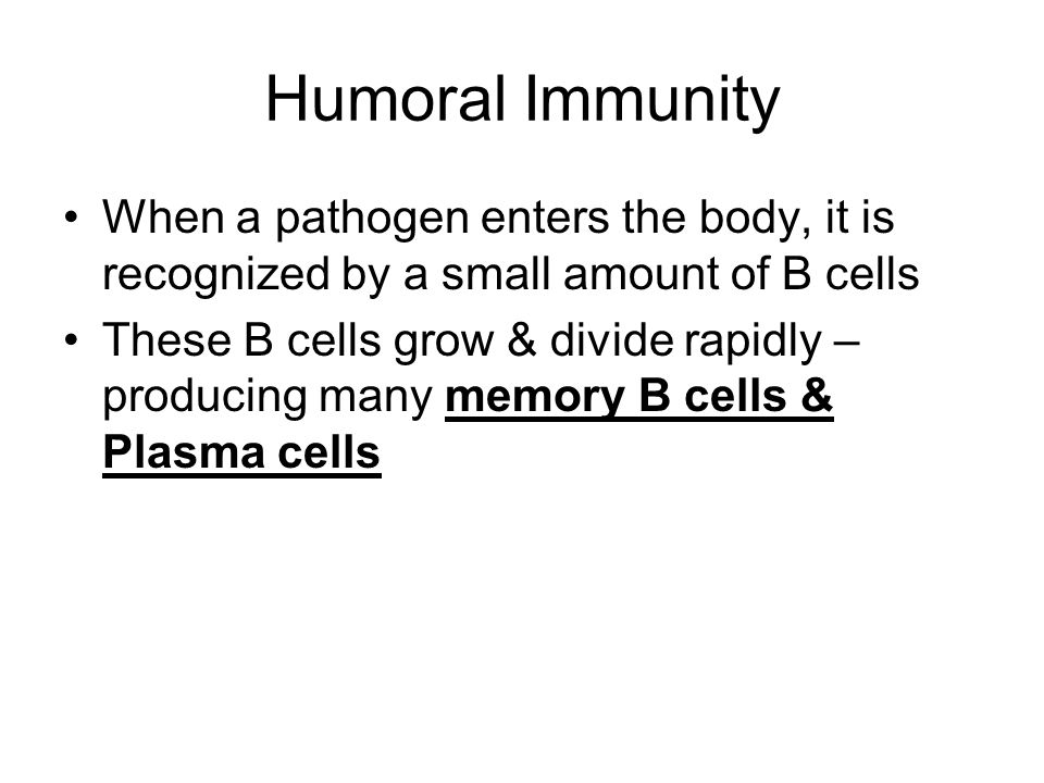 Plasma cells Plasma cells release ANTIBODIES – recognize & bind to antigens Antibodies attack the pathogen until it has taken it over Once infection is gone, the plasma cells die & stop producing antibodies