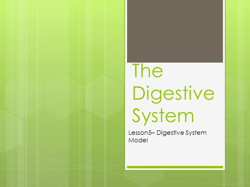 Students will gain a full understanding of how the digestive and excretory system work in their own bodies.