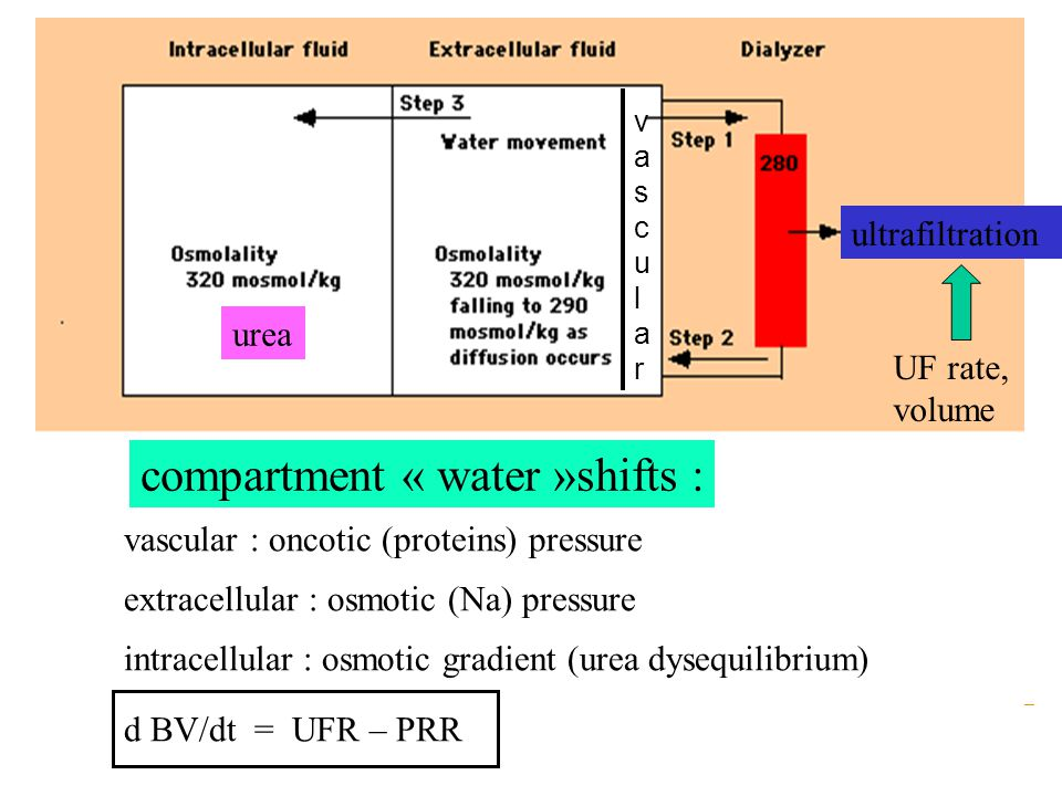 Compartment shitfs, water and solutes, extracellular (vascular, interstitial) and cellular compartments : multifactorial  Pressures : hydrostatic ; osmotic crystalloid (Na, urea, glucose) ; osmotic colloid(proteins)  Wall permeability : membranes vessels, cells  Regional blood flow : *cardiac flow, *peripheral vascular resistances (hypovolemia, acidosis, cooled dialysate….) *extra/intra cellular functional compartments