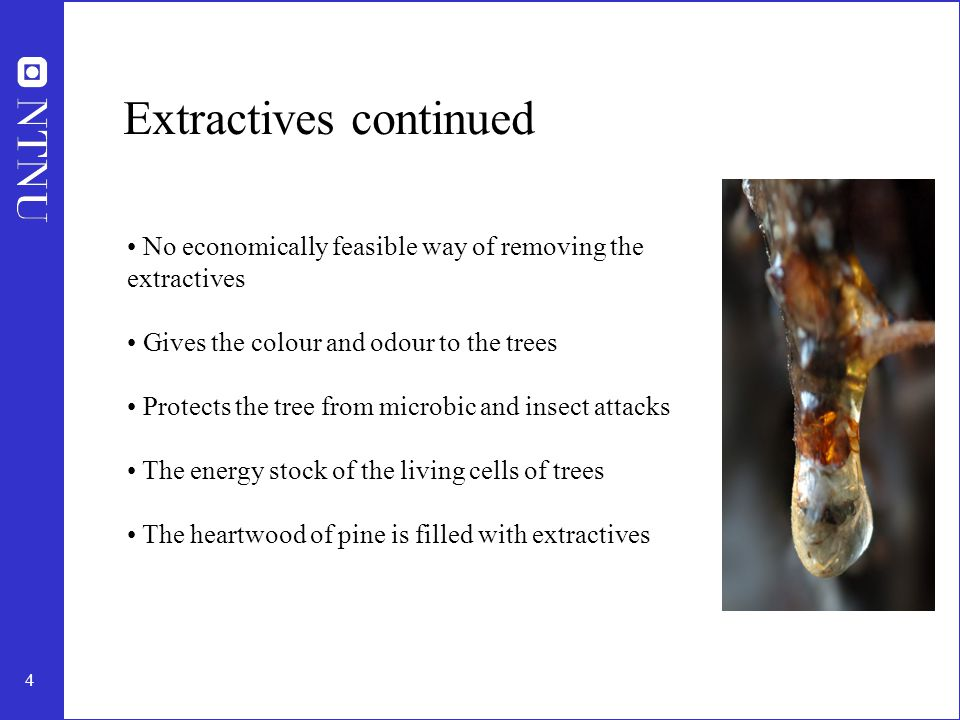 5 General distribution in the tree Most extractives are located in resin canals and/or parenchyma cells High extractives content in heartwood of pine Extractives level decreases higher up in the tree The general composition of the extractives varies over the stem cross section of wood 20-40 % extractives in bark