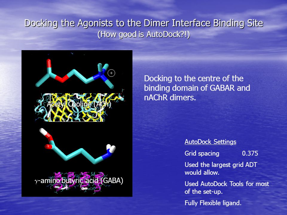 Docking the Agonist the Binding Site – Results.