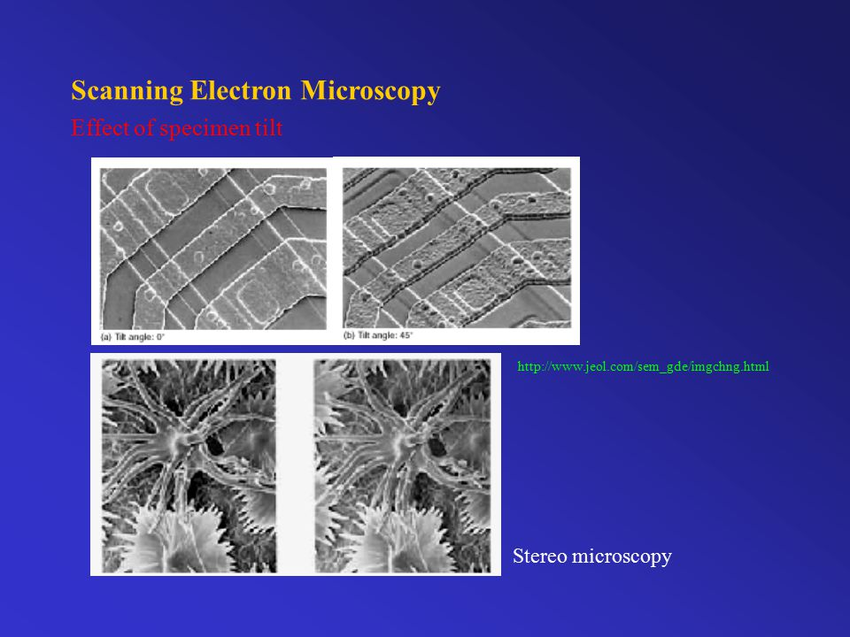 Scanning Electron Microscopy Effect of accelerating voltage http://www.jeol.com/sem_gde/imgchng.html (1) (2) (3)