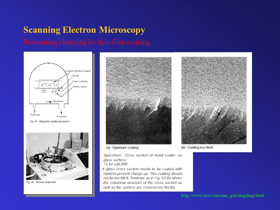 Scanning Electron Microscopy Electron beam damages and contamination http://www.jeol.com/sem_gde/imgchng.html Carbon contaminant deposited by electron beam Electron beam damage on a fly's compound eye