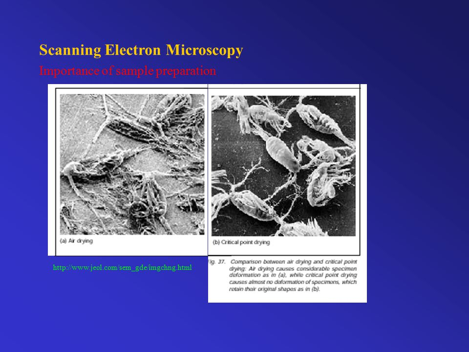 Electron-Specimen Interaction e-e- e-e- e-e- backscattered e - elemental contrast secondary e - surface topography Primary or unscattered e - projected sample image transmission electron microscopy http://www.jeol.com/sem_gde/imgchng.html http://www.unl.edu/CMRAcfem/ http://www.ou.edu/research/electron/www-vl/ http://www.mwrn.com/guide/electron_microscopy/microscope.htm