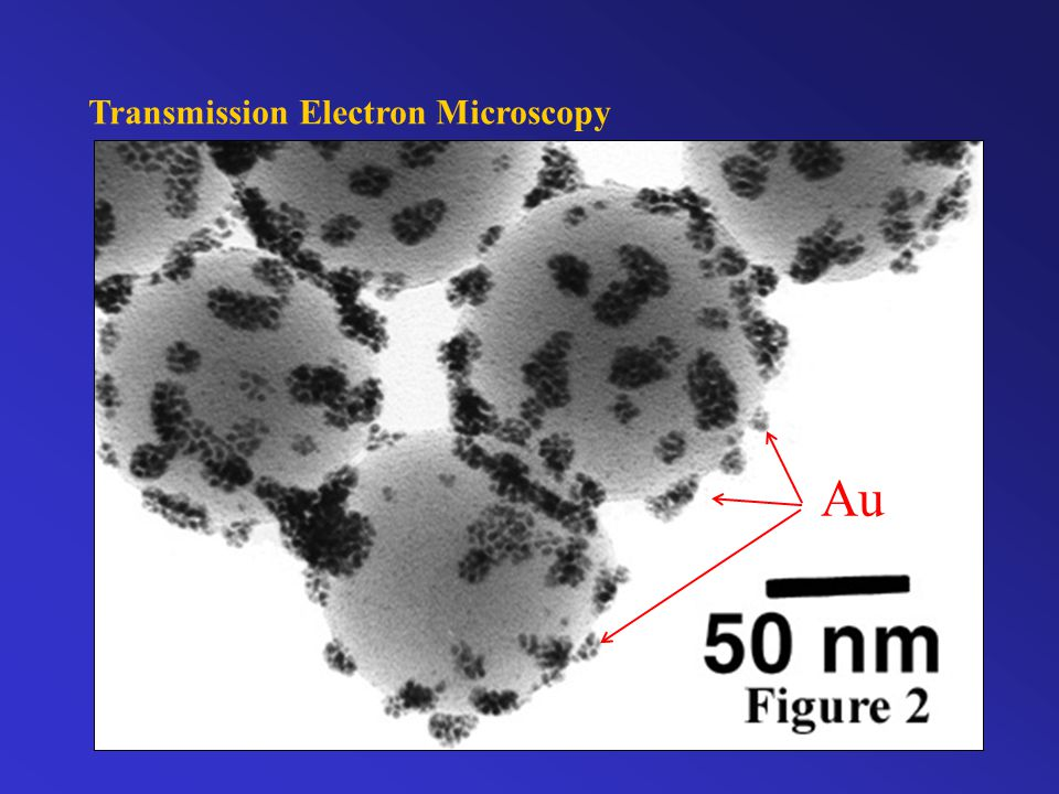 Transmission Electron Microscopy Primary or unscattered electrons diamond gold TEM http://em-outreach.sdsc.edu/web-course
