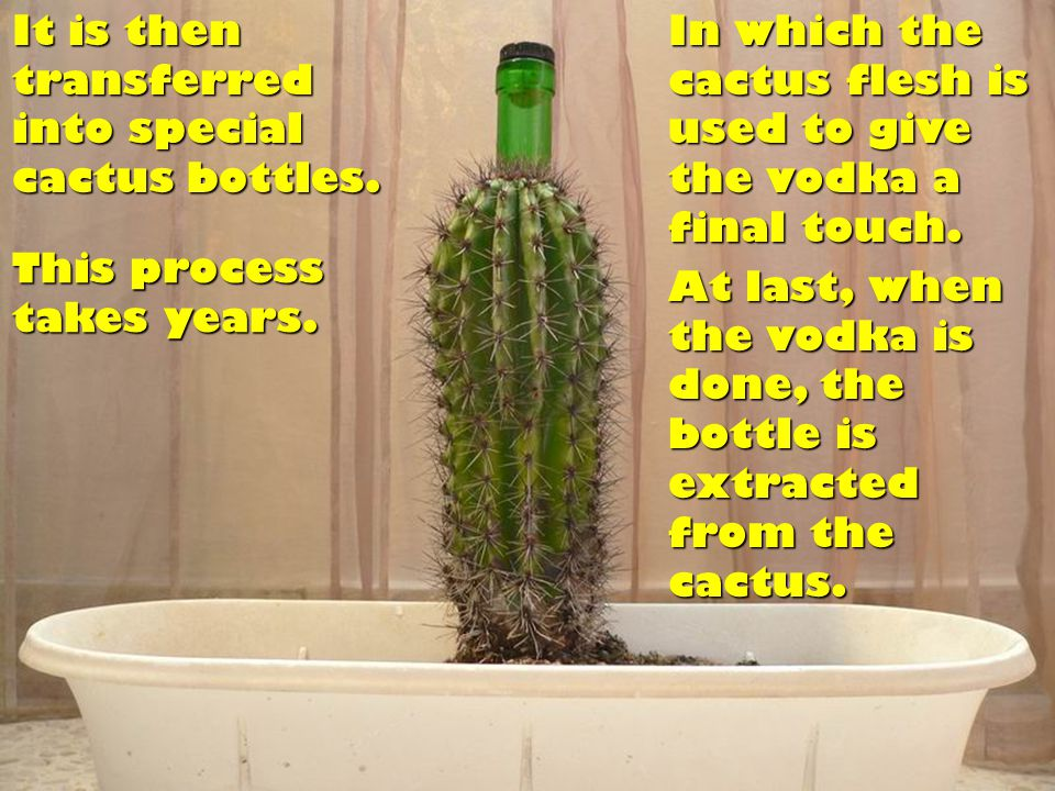 And we get the finest Original Dvesty`s Cactus Vodka. All that`s left to do is...