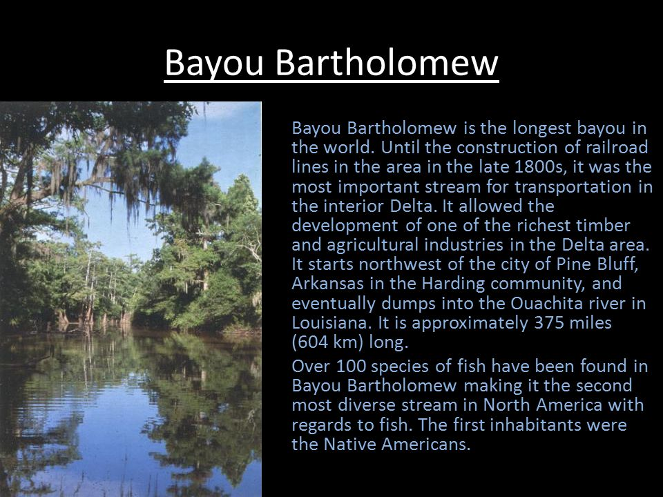 Bayou Bartholomew Continued Bayou Bartholomew and its watershed shelters a remarkable assemblage of 117 species of freshwater fish and at least 40 species of mussels, including more than half of all mussel species known in Louisiana and at least three mussel species currently listed by the federal government as endangered or threatened.