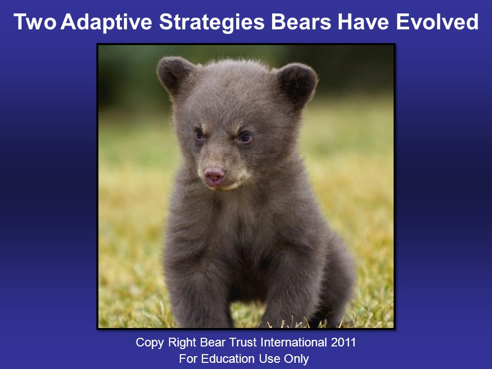 Adaptive Strategies: Hibernation