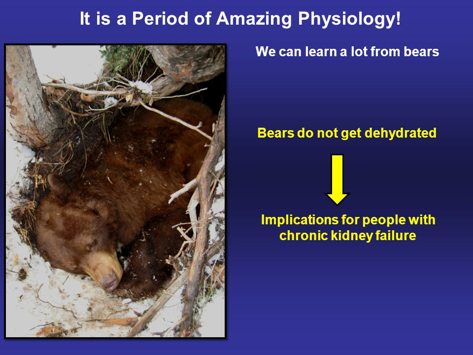 Denning bears have very high cholesterol levels Dissolves cholesterol gall stones, eliminating need for surgery It is a Period of Amazing Physiology.