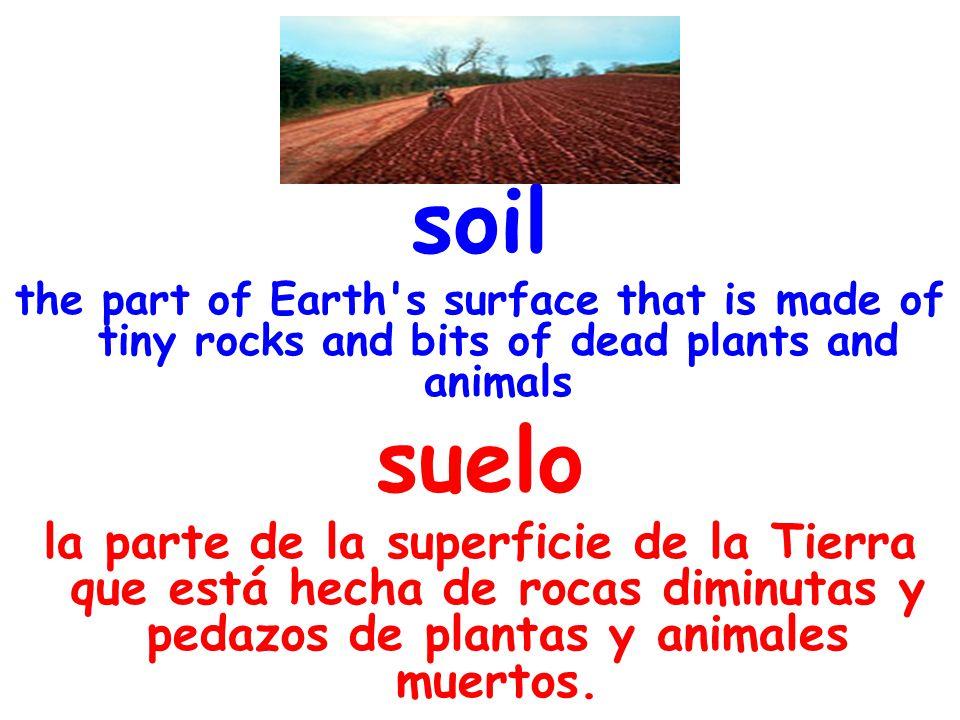 roots plant parts that hold plants in the soil and take in water raíces una parte de la planta que la sostiene en el suelo y toma agua