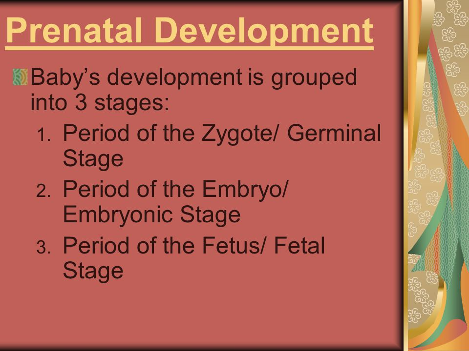 Period of the Zygote Zygote- the fertilized egg, is formed.