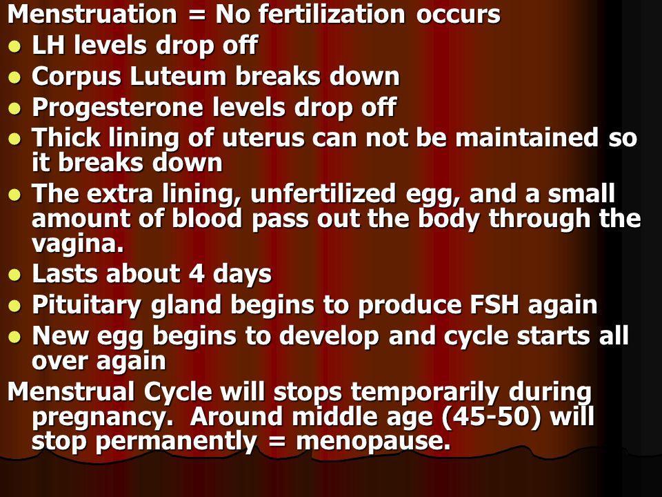 Fertilization and Development: Sex - Hundreds of millions of sperm are ejaculated into the vagina.