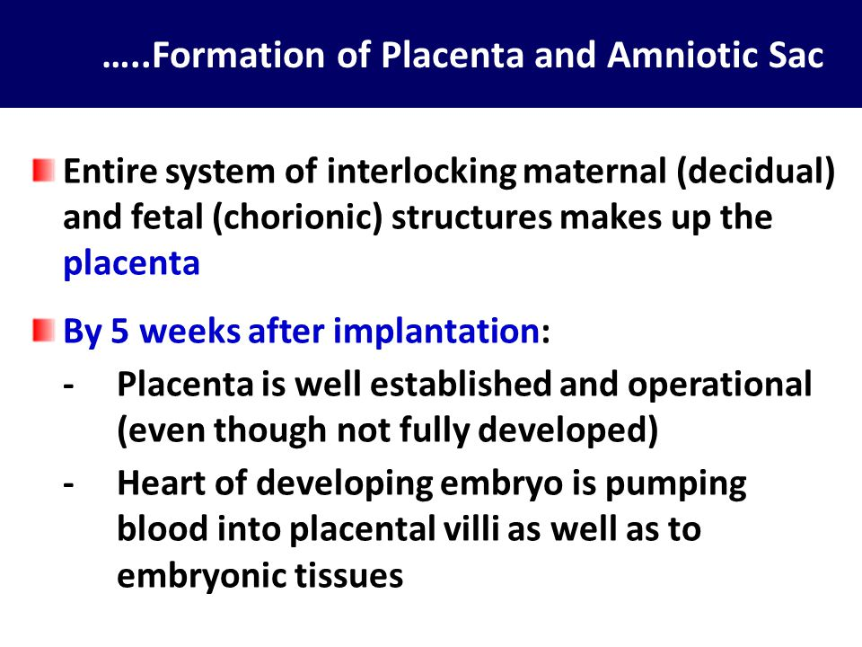 Placenta Specialized organ of exchange between maternal and fetal blood Derived from: -trophoblastic tissue, and -decidual tissue Function: to sustain the growing embryo / fetus during intrauterine life