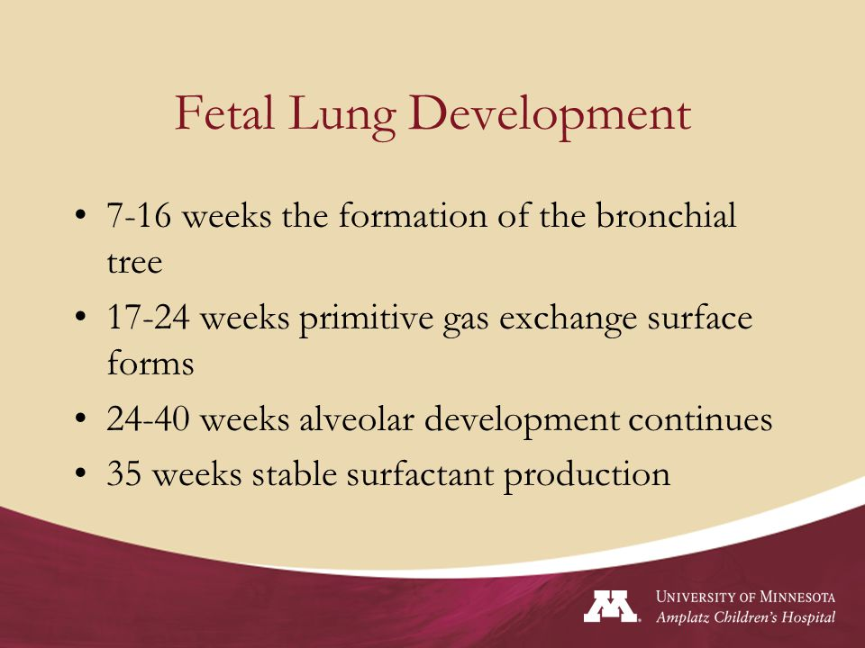Postnatal Lung Development Newborn –Airway branching complete –Alveolar formation is not complete Age 1-10 years number of alveoli increase Age 10 to young adult lung grows larger with little alveolar growth