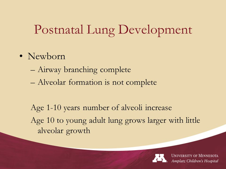 Fun Facts Surfactant is produced by alveolar epithelial cells (type II) Surfactant production increases 2 weeks prior to normal birth We are born with on 1/6 th the number of alveoli we will need as an adult.