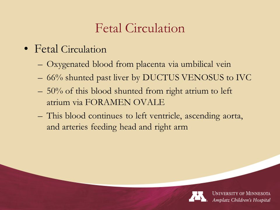 Fetal Circulation cont'd Venous blood from head (SVC) is directed via right atrium to right ventricle into the pulmonary artery 90% of blood in PA is shunted away from lungs and into descending aorta via the DUCTUS ARTERIOUS and returns to the placenta via the umbilical arteries.