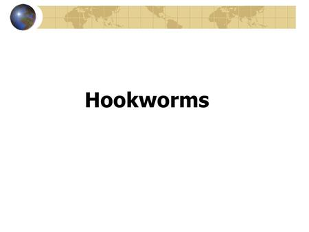 Hookworms. Necator americanes Ancyclostoma duodenale.
