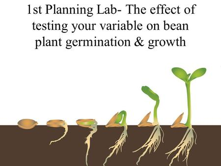 1st Planning Lab- The effect of testing your variable on bean plant germination & growth.