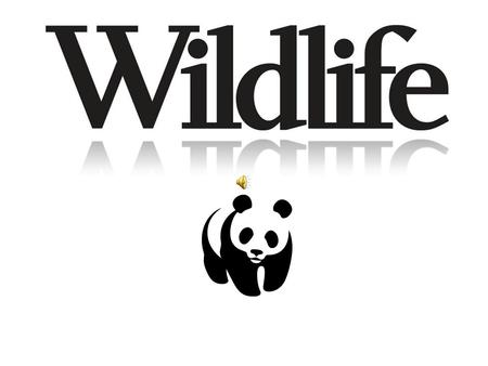 Wildlife is a term that traditionally refers to non-domesticated vertebrates, but has come into more general usage to refer to all wild plants, animals.