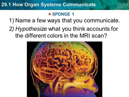 29.1 How Organ Systems Communicate SPONGE 1 1)Name a few ways that you communicate. 2)Hypothesize what you think accounts for the different colors in the.