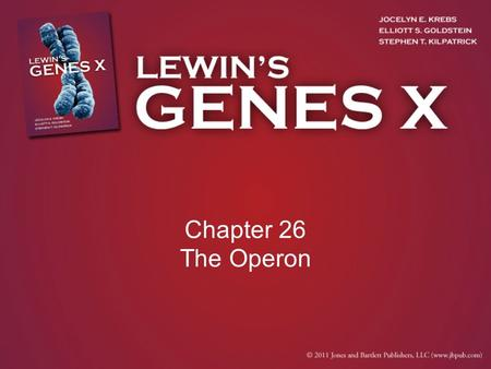 Chapter 26 The Operon. 26.1 Introduction coupled transcription/translation – The phenomena in bacteria where translation of the mRNA occurs simultaneously.