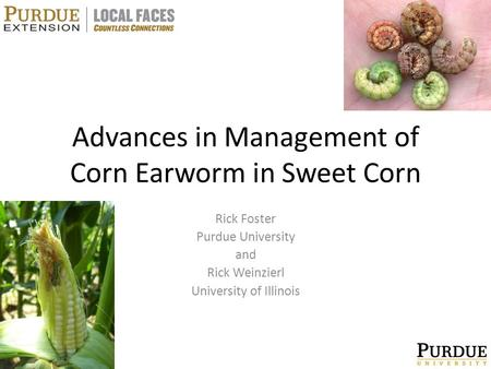 Advances in Management of Corn Earworm in Sweet Corn Rick Foster Purdue University and Rick Weinzierl University of Illinois.